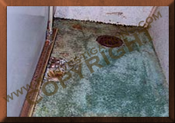 floor carpet mold